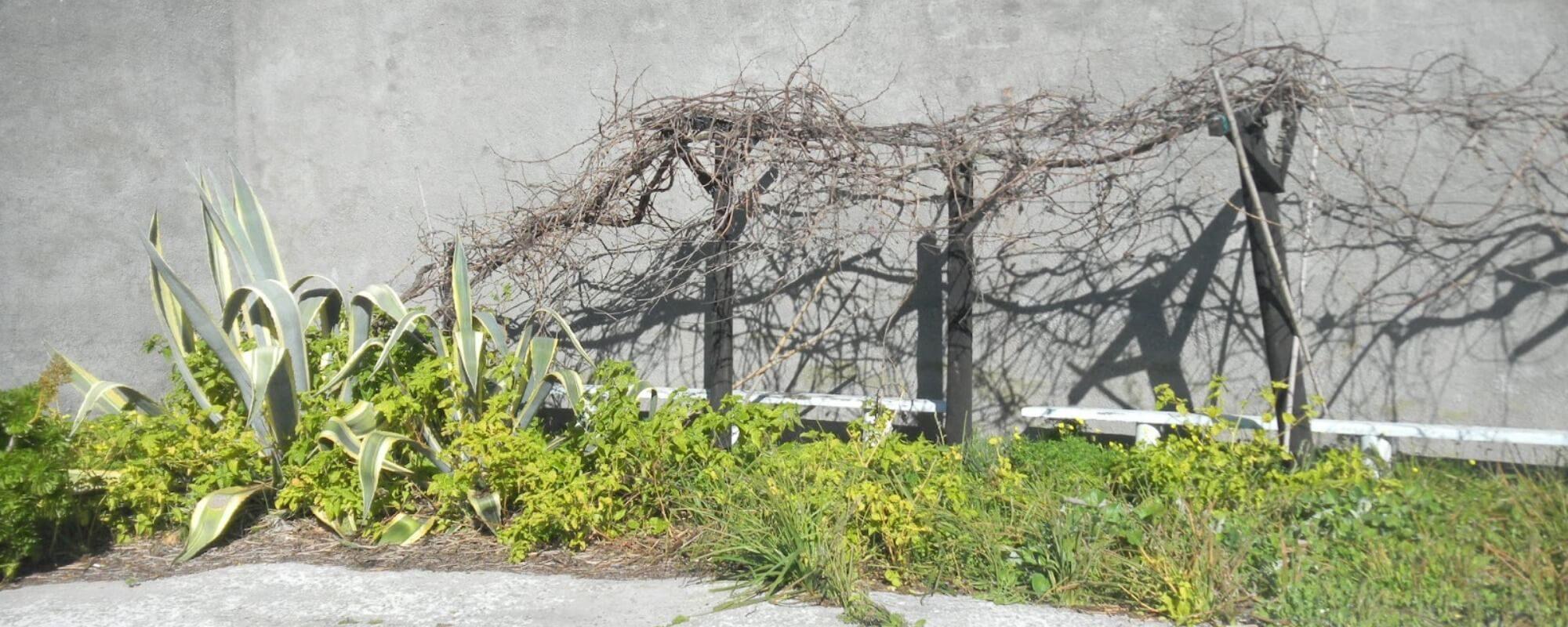 nelson-mandela-prison-garden