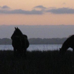 Wild Horses at Sunset on the Bot River Estuary